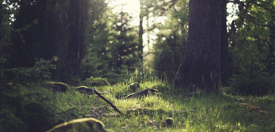 Waldwuchs